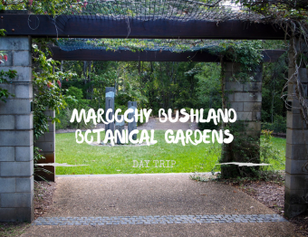 One for the kids… Maroochy Bushland Botanic Gardens