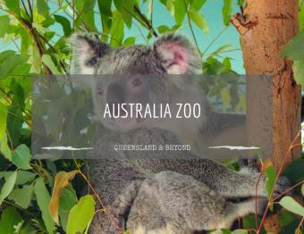 Getting close to kangas at Australia Zoo