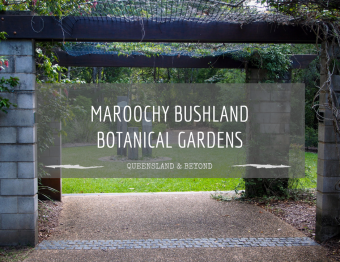 Exploring the Maroochy Bushland Botanic Gardens