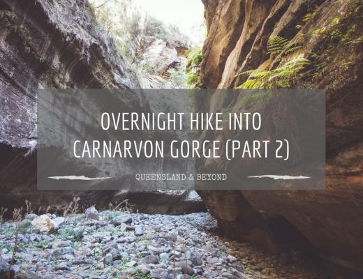 Carnarvon Gorge: Part 2 (Sandstone Belt road trip)