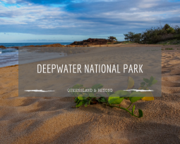 Sunshine, baby turtles and waves: Deepwater NP