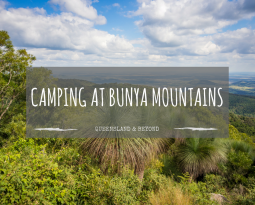 Bunya Mountains: Camping review