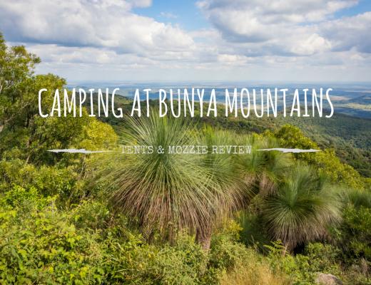 Camping at Bunya Mountains: Review