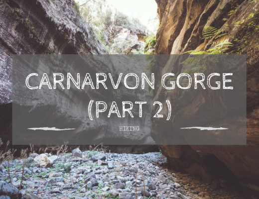 Carnarvon Gorge: Part 2 (Sandstone Belt road trip)