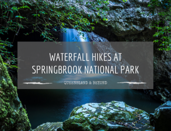 Hiking Springbrook National Park: A waterfall guide