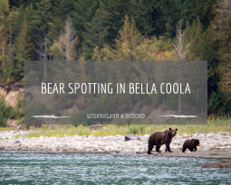The bears of Bella Coola: Bear watching options