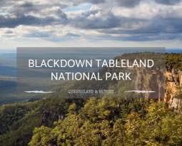 A Guide to Blackdown Tableland National Park